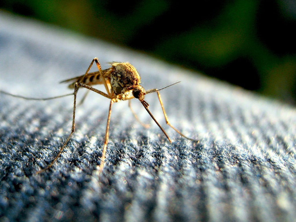 11 Tips And Tricks To Keep Mosquitoes Away Wowo 1190 Am 107 5 Fm